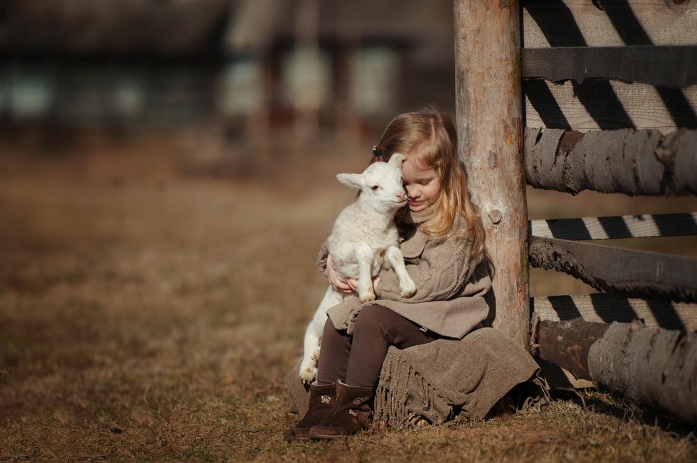 Kind Schaf Bauernhof